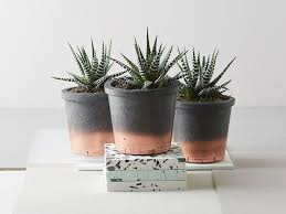 Best Plant For Bathroom by 8 Best House Plants The Independent