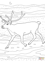Click The Caribou Coloring Pages