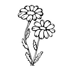 Coloring Pages Of A Flower Picture Animal And