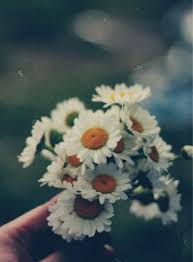 31 Images About Flowers On We Heart It
