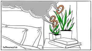 pflanzen im schlafzimmer für bestes raumklima luftbewusst de