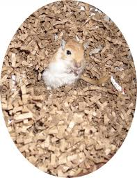 Can Guinea Pigs Eat Salted Pumpkin Seeds by All About Gerbils Care For Your Gerbil U0027s Diet Pethelpful