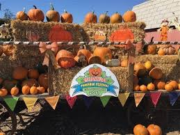 Pumpkin Patch Cal Poly Pomona by Wapa Cal Poly Pomona Pumpkin Festival Oct 2017 Youtube