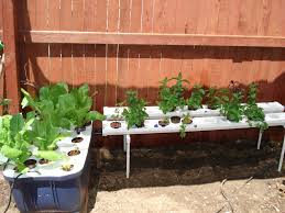 Herbs In Nutrient Film Technique (NFT), Lettuce In Home Built ... Hydroponic Home Garden Backyard Food Solutionsbackyard Oc Aquaponics Project Admin What Is Learn About Aquaponic Plant Growing Photos Friendly Picture With Amusing Systems Grow 10x The Today Bobsc Ezgro Amazoncom Vertical Gardening Vegetable Tower Indoor Outdoor From Fish To Ftilizer Greenhouse Im In My City Back Yard Yes I Am Satuskaco