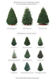 Nordmann Fir Christmas Tree Seedlings by Ask Mr Christmas Tree Winter 2013 Washington State Magazine