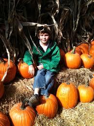 Pumpkin Patches Near St Peters Mo by Daniel U0027s Farm U0026 Greenhouse Saint Peters Mo 63376 Yp Com