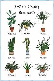 pflanzen die helfen die luft zu reinigen un blumen natur