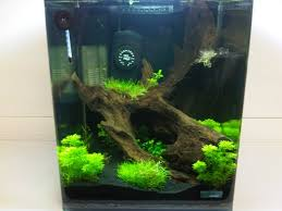 how to setup a nano aquarium with live plants freshwater guides