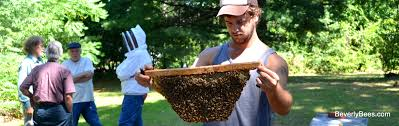 Top Bar Hive Honey Harvest With Sam Comfort - Beverly Bees Bkeeping For Beginners Pt1 Video On How To Build A Top Bar Hive Feeder Set Up Behind Follower Board In Bkeeper Top Bar Hive Melissas Honey Bees Epic Beehive Swarm Trap Youtube How Transfer Brood Comb From Langstroth Frames New 200 Hives The Lowcost Sustainable Way A Bee Keeping Make Favorite Sewisabel Backyardhive And Bkeeeping Supplies Sale To Install Package Beverly Getting Started Your First Year As Beehive By Eco Box Eco Bee Box Modern