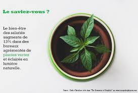 le bureau verte les bienfaits des plantes vertes au bureau my