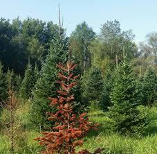 Christmas Tree Shop Syracuse Ny by Beckwith Christmas Tree Farm Home Facebook