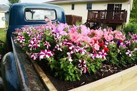 To Celebrate Life Man Gives Old Truck New As Flower Bed