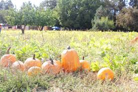 Jacksonville Oregon Pumpkin Patch by Pheasant Fields Farm Oct 1 Medfordmom