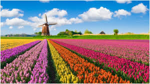 the tulip mania when the flower cost more than a
