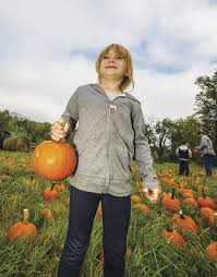 Pumpkin Farms In Nj by Finding Pumpkin Perfection Local Farms Say Harvest Is Good And