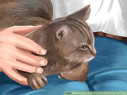 cat stop 4 ways to stop your cat from attacking your wikihow