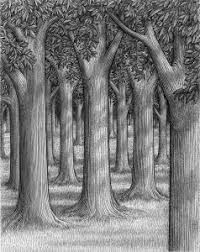 Medium Size Of Coloring Pagesdrawing Forest Trees Beautiful Drawing Tree Drawings Landscape