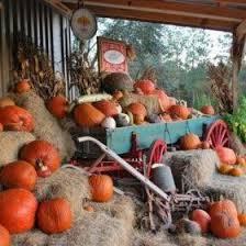 Pumpkin Patch Lafayette La by Grant Farms U2013 Memories Await U2026