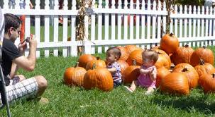 Coconut Grove Pumpkin Patch by Florida Free Frugal Coconut Grove Pumpkin Patch