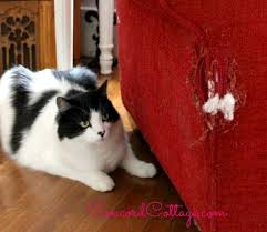 Microfiber Sofas And Cats by How To Repair A Cat Scratched Chair Or Sofa Hometalk