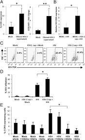 Viral Shedding Herpes 2 by Herpes Simplex Virus Type 2 U2013infected Dendritic Cells Produce Tnf α