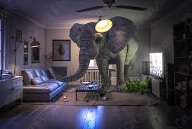 foto auf lager großer elefant im wohnzimmer
