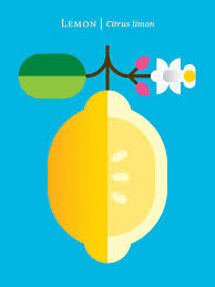 Graphic Fruit Posters By Christopher Dina Flat Design Fruits Colorful