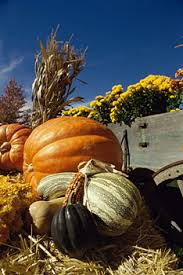 Pumpkin Picking Nj by Welcome To Sussex County Strawberry Farm Website Pumpkin Picking