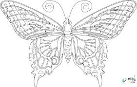 Monarch Butterfly Coloring Pages Free Page Photograph Simple