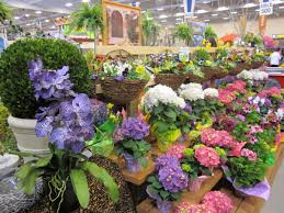 Official Community Newspaper Of Kissimmee, Osceola County ... Birmingham Home Garden Show Sa1969 Blog House Landscapenetau Official Community Newspaper Of Kissimmee Osceola County Michigan Fact Sheet Save The Date Lifestyle 2017 Bedford And Cleveland Articleseccom Top 7 Events At Bc And Western Living Northwest Flower As Pipe Turns Pittsburgh Gets Ready For Spring With Think Warm Thoughts Des Moines Bravo Food Network Stars Slated Orlando