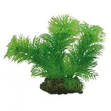 plante artificielle pour aquarium hobby egeria 13cm plante artificielle pour aquarium décorations