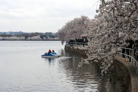 fleur et plante du lac images gratuites arbre eau hiver plante lac rivière