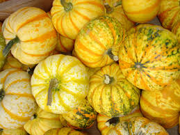 Worlds Heaviest Pumpkin In Kg by Pumpkins Information And Pictures