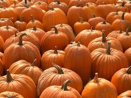 Pumpkin Patch Frederick Md by 25 Pumpkin Patches Near Washington D C Mapped Sharp U0027s At