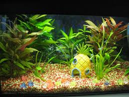 Spongebob Aquarium Decor Amazon by Plant Roots Growing Everywhere 15 Gallon Tank 83950