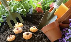 how to store summer flowering bulbs for winter garden