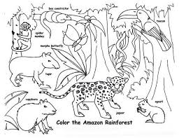 Amazon Rainforest Animals Coloring Page