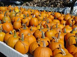Types Of Pumpkins For Baking by Pumpkins Agricultural Marketing Resource Center