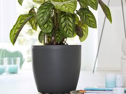 zimmerpflanzen richtig pflegen ratgeber tipps obi