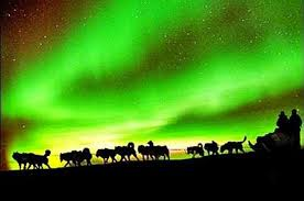 Northern Lights Viewing including Dinner and 1 Hour Dog Sledding