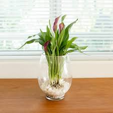 how to grow bulbs in a glass vase grow bulbs bulbs and gardens