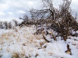 Shed Hunting Utah 2017 by Shed Hunting Hunting News Gohunt
