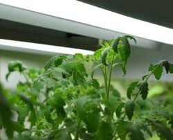 growing plants with artificial lights thriftyfun