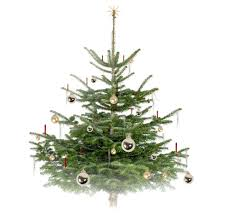 Noble Fir Flocked Artificial Christmas Tree by With Our Best Wishes Stylepark