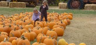 Pumpkin Patches Maryland Heights Mo by Grandma U0027s Pumpkin Patch And Haunted Corn Maze Midland Roadtrippers