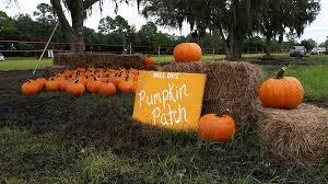 Pumpkin Patch Festival Milwaukee by 10 Best Pumpkin Patches In Florida