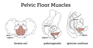 Pelvic Floor Relaxation Exercises Youtube by Natural Mama Nz November 2013