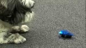 Desk Pets Carbot Youtube by Trekbot и Skitterbot прикольная игрушка для собак Youtube