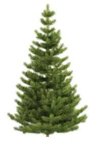 Christmas Tree Shop No Dartmouth Ma by Massachusetts Where And How To Recycle Your Christmas Tree After