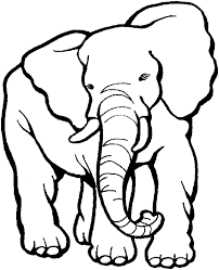 Elephant Preschool Coloring Design Inspiration Zoo Animal Pages